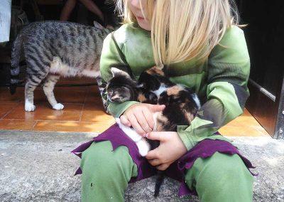 Felix  oved the kittens!